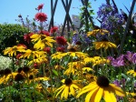 Flowers, sunny Rudbeckias in Getty Central Garden