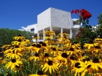 Rudbeckia flowers with Getty building in background