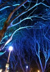 Sydney Vivid Light Festival - Hyde Park Fig Trees in Blue