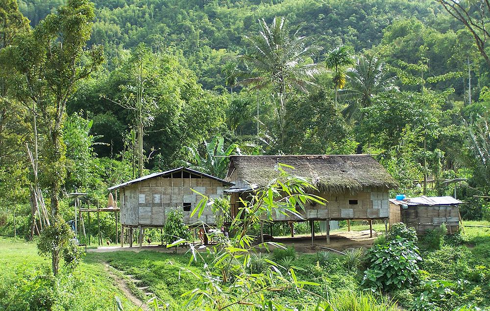 Image result for orang asli village cameron highlands