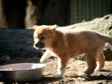 Images of: Australian Animals and New Dingo Pups @ Featherdale Wildlife Park Sydney