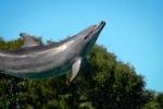 Bottle Nose Dolphin Sea World - N.Hayter 2011