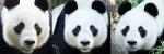 PandaHeader